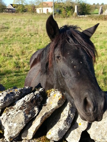 Little black horse