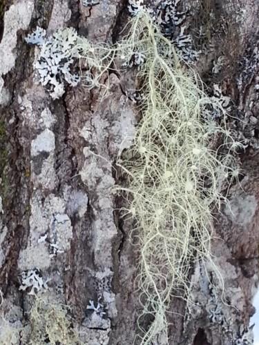 Lichens en famille