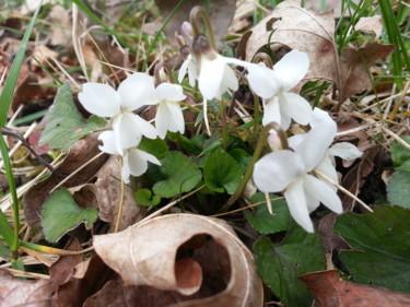 Des que le printemps revient - 3
