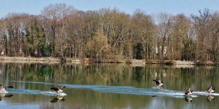 MBL Brigitte Mathé - Atterrissage de Bernaches sur la Seine 13